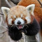 19 милюшных животных, которые поднимут настроение на весь день