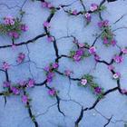 24 фотографий о том, что природа сильнее всего