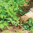 Сорняки: фото, названия и описание