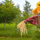 Страшное, но симпатичное: сторож на вашем огороде