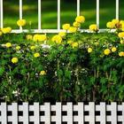 Цветник за забором: что посадить у входа на участок
