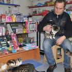 Турки спасают бездомных животных от непогоды