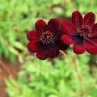 Топ 10 самые красивые цветы в мире