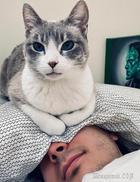 20 доказательств, что если в доме есть кошка, человек там хозяином никогда уже не будет