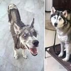 25 фотографий собак до и после взятия из приюта, которые растопят ваше сердце