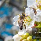 Фотопрогулки.  Весенний цвет