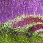 Красиво, как в сказке: завораживающие туннели из глицинии в Японии