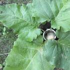 Секреты спецназа: как можно использовать обычные листья