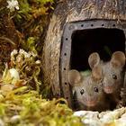 Фотограф устроил садовым мышам жизнь-сказку и делает забавные фотосессии