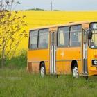 Посмотрите на красивые фотографии знакомых и неизвестных автобусов «Икарус» разных лет