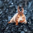 Супер портреты животных от фотографа Сергея Полюшко