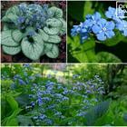 11 красивых цветов для тени и полутени