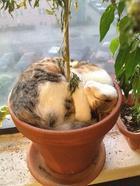 Коты-флористы