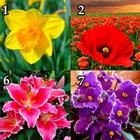 Выберите цветок и узнайте о себе интересную информацию