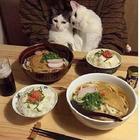 Самые забавные и смешные моменты, которые могли случиться в жизни кота