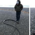 На побережьях Чукотского полуострова обнаружили огромных «морских змей» из США