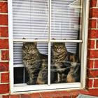 Животные-близнецы - 25 очаровательных фото