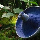 15 самых красивых грибов в природе
