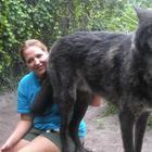 7 лет назад волка Юки спасли от усыпления, и посмотрите, каким он теперь стал