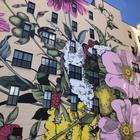 Красочные цветочные сады на стенах домов