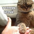 17 фото забавных котов и котят со смешными подписями