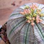 12 дивных комнатных растений, о которых вы еще не знаете!