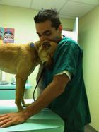 Благодарные животные: 10 братьев наших меньших которые не забыли доброту своих спасителей