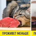 12 типичных ошибок, которые значительно сокращают жизнь домашних животных