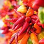 3 растительных средства, которые лечат почти все острые состояния!
