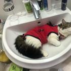 Кошки, которые могут отключиться, не успеете вы и глазом моргнуть
