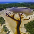 """Фотограф запечатлел захватывающее дух """"Дерево жизни"""" на вышедшем из берегов озере Какора"""