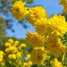 Цветник в стиле ретро: 10 цветов из нашего детства