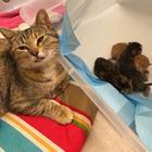 13 историй о том, что жизнь с котом — всегда праздник. Для кота