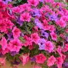 Какие цветы посадить на даче, чтобы цвели все лето фото с названиями?