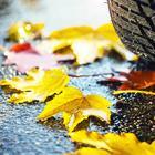 8 полезных советов водителю на ноябрь