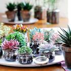 Суккуленты – особенные цветы