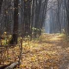 Ноябрьский лес... (Стих)