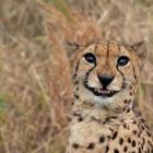 18 фотографий животных, глядя на которые вы сами не заметите, как расплывётесь в улыбке