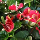 Поверья о домашних растениях