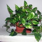 10 неприхотливых растений для вашего дома, которые почти не требуют ухода