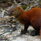 15 странных, но замечательных существ, обитающих на Мадагаскаре
