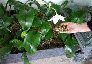 Вермикулит для растений – как применять в дачном хозяйстве?