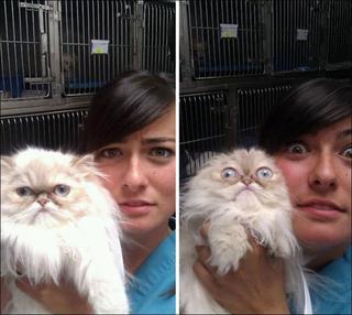 Коты, которые поняли, что их привезли к ветеринару!