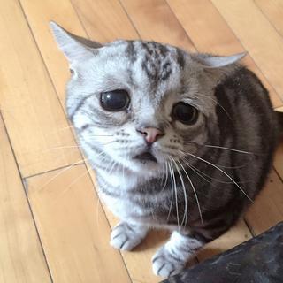 Грустная кошка по кличке Луху
