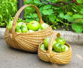 Зеленые томаты против аллергии