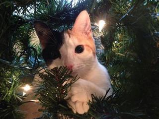 Кто больше всех рад новогодней ёлке?