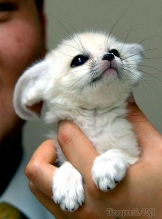 Счастье на ладони: 20 очаровательных детёнышей животных, которые легко помещаются в руках