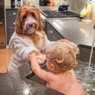 Трогательная дружба приемного сына с очаровательным лабрадудлем