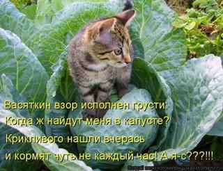 Новые котоматрицы для всех!