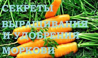 Морковь. Секреты удобрения и выращивания
